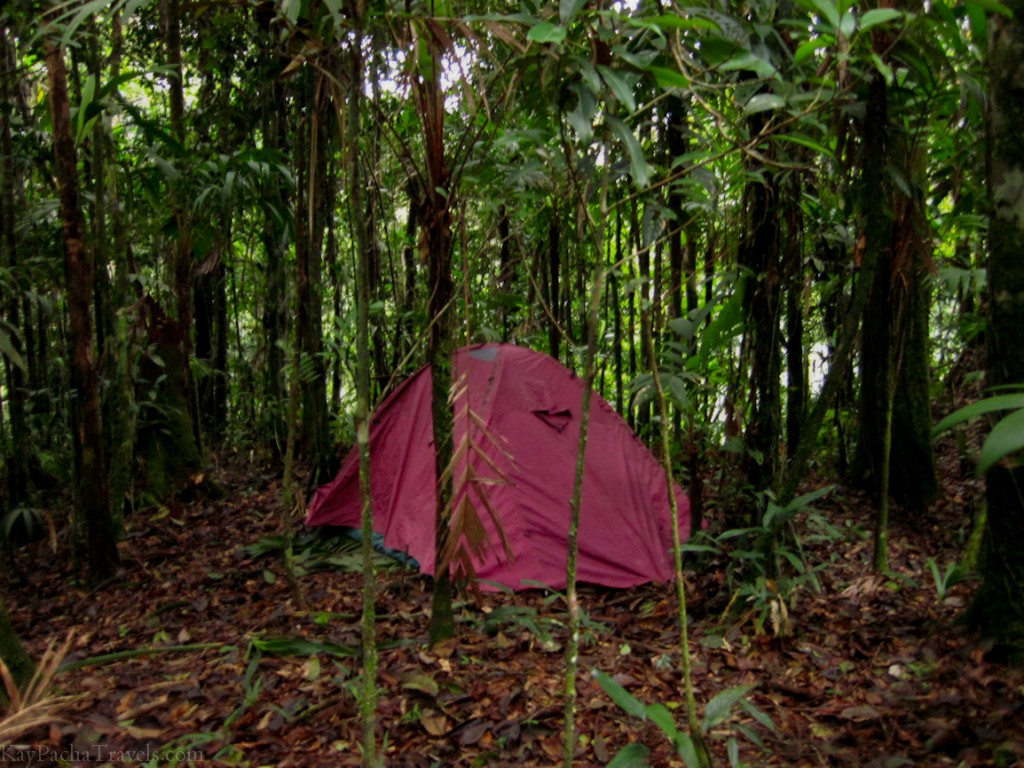Peruvian amazon jungle camping- sometimes, it's an itchy love affair
